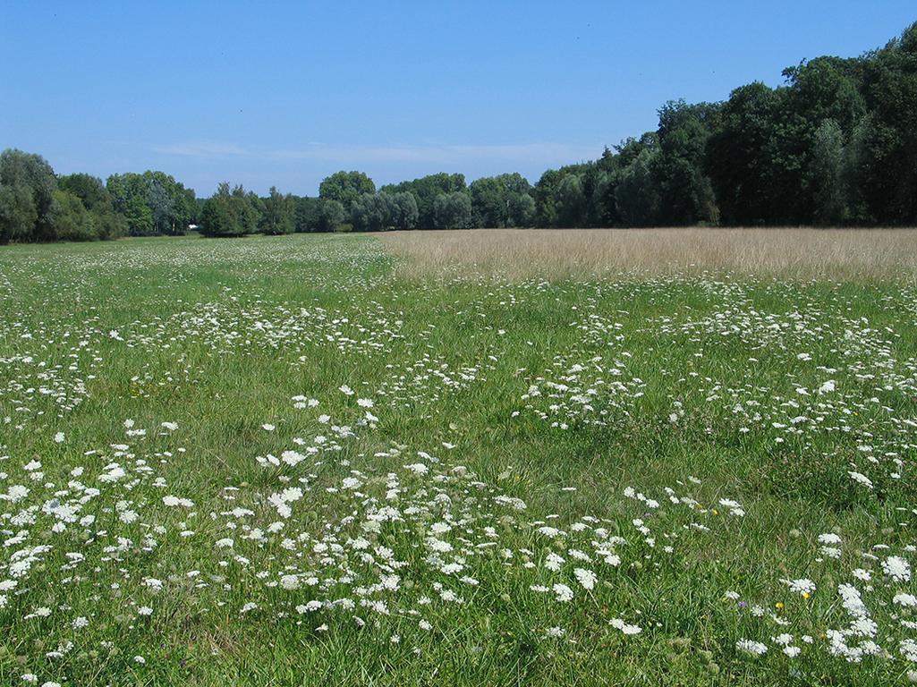 Fertilisation azot e des prairies chambre d 39 agriculture - Chambre d agriculture 66 ...